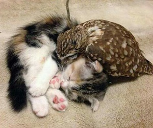 cat, owl, and cute image