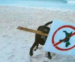 dog and animalista image