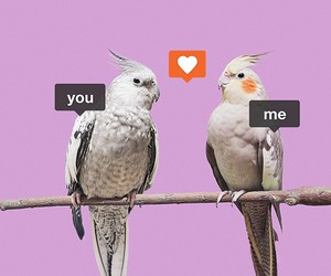 birds, lol, and cute image