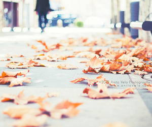50mm, autumn, and fall image
