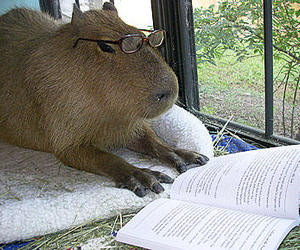 adorable, book, and glasses image