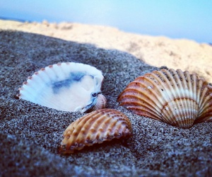 beach, freedom, and love image