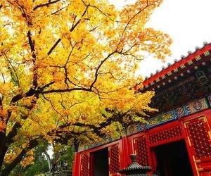 autumn, beautiful place, and china image