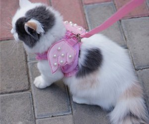 cats on leashes image