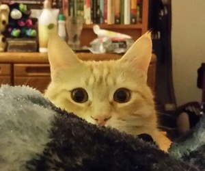 cat, cuddles, and eyes image