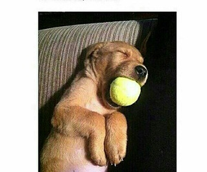 puppy, ball, and funny image