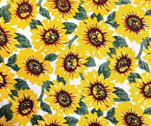 flowers, background, and sunflower image