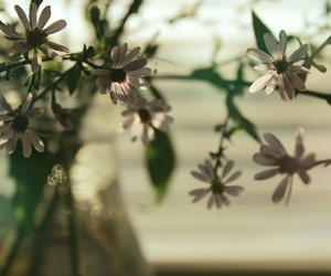 bokeh, flowers, and love image