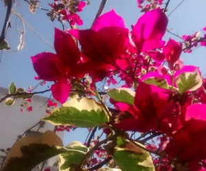 argentina, flower, and flores image