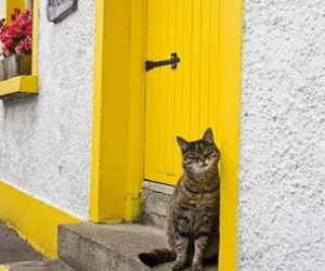 yellow, cat, and aesthetic image