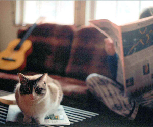 cat, guitar, and photography image