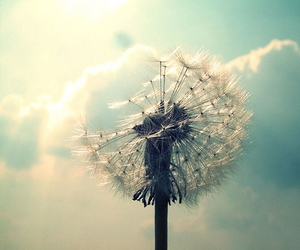 flowers, dandelion, and sky image