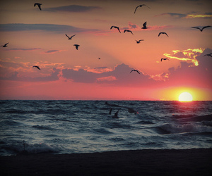 sunset, bird, and sea image