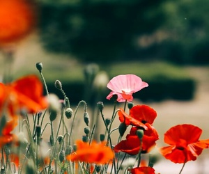 beautiful, flower, and colorful image