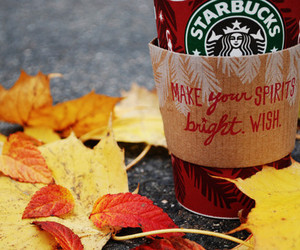 starbucks, autumn, and fall image