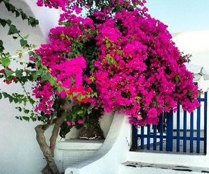 capri, travel, and Greece image