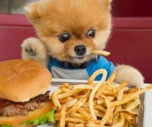 dog, cute, and food image