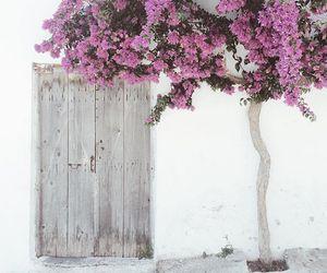 color, tree, and door image