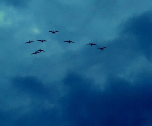 birds, Flying, and free image