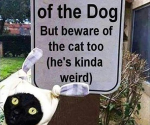 funny, cat, and dog image