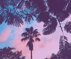 sky, beach, and palms image