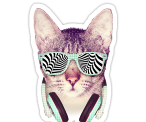 gato, cute, and png image