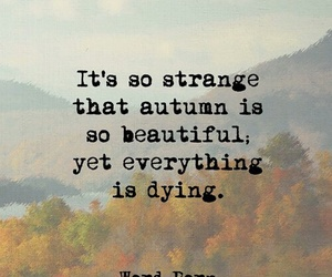 autumn, dying, and beautiful image