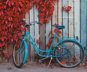 leaves, autumn, and bike image