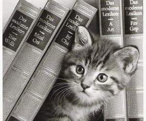 book, kitten, and cute image