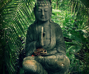 Buddha and nature image