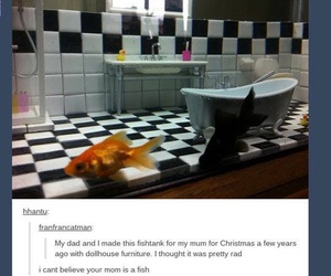 fish, funny, and tumblr image