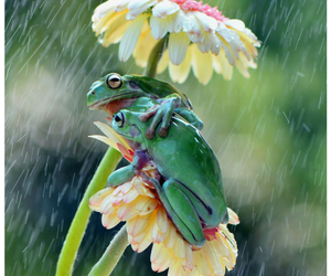 frog, flowers, and rain image