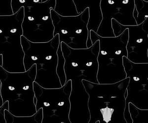 cat, eyes, and rebel image