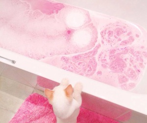 cat, pink, and bath image