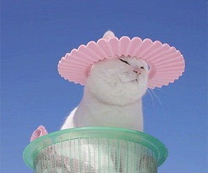cat, gif, and pink image