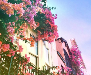 cool, flowers, and house image