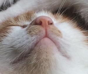 cat, kitten, and kittens image