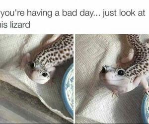 gecko and lizard image