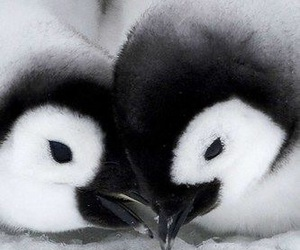 penguin, animal, and love image