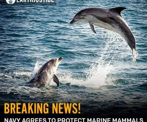 dolphin, news, and sonar image