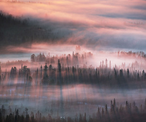 fog, nature, and forest image