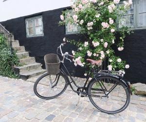 denmark, bike, and lovely image