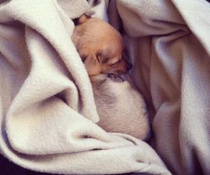 blanket, sleepy, and puppy image