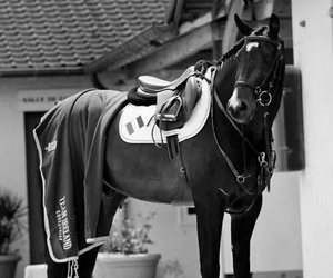 horse, equestrian, and sport image