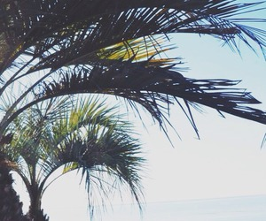 summer, palms, and ocean image