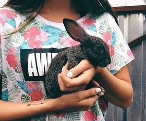 rabbit and animal image