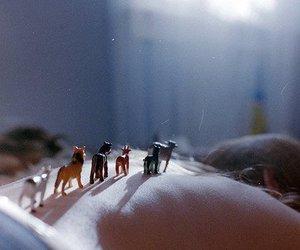 animals, skin, and sunlight image