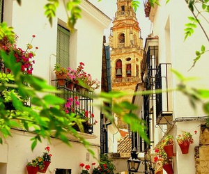 spain, Cordoba, and flowers image