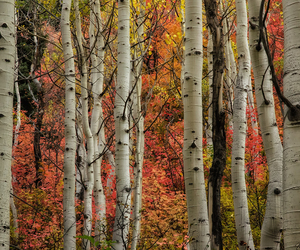 autumn, fall colors, and landscape image
