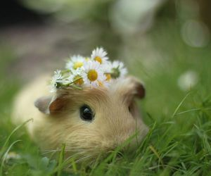 cute, flowers, and animal image